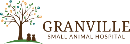 Review of a small animal Hospital veterinary website in upstate New York